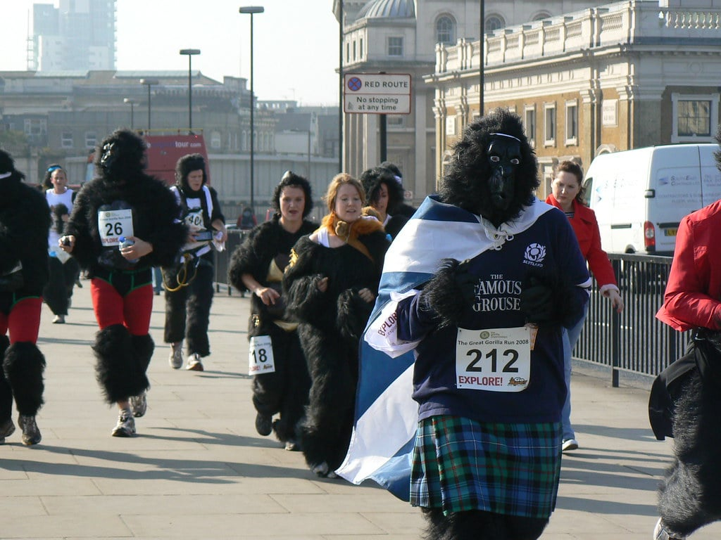 Edward Tomasso Great Gorilla Run